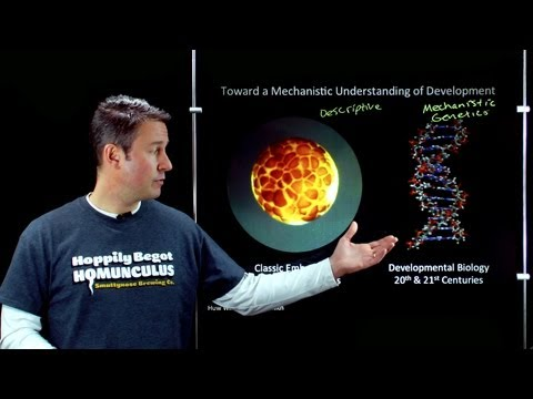 "Online Developmental Biology: Unit 1, Lecture 1 - ""Little Man"""