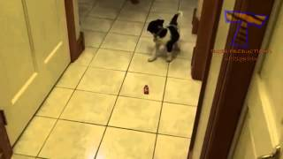 Dogs get scared of random things   Funny scared dogs compilation