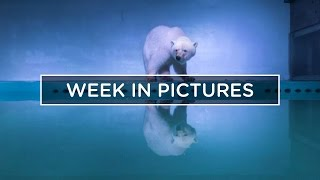 POLAR BEAR IN A SHOPPING MALL :: THE WEEK IN PICTURES
