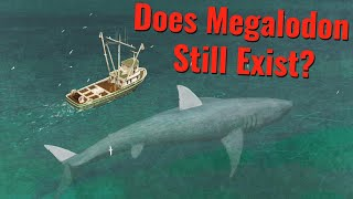 Does Megalodon Still Exist?