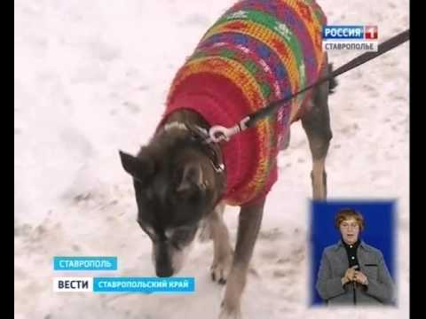 Самый старый тойтерьер России живет в Ставрополе