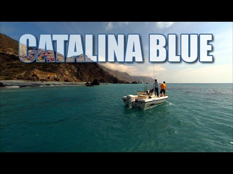 Catalina Blue - CALICO BASS fishing in California