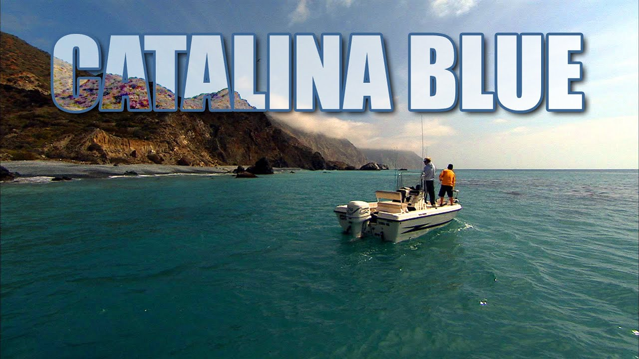 Catalina blue calico bass fishing in california youtube for Catalina island fishing report