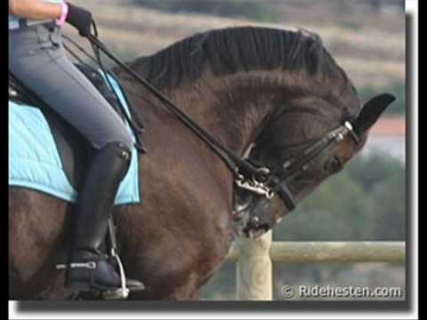 liebe oder doch nur freundschaft. Pferde sind doch mehr als
