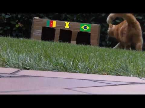 BRAZIL 2014 : CAMEROON - BRAZIL 1-4