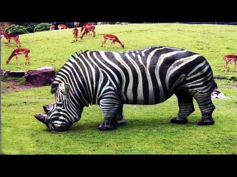 10 Bizarre Tiere Die Es Tatsächlich Gibt!