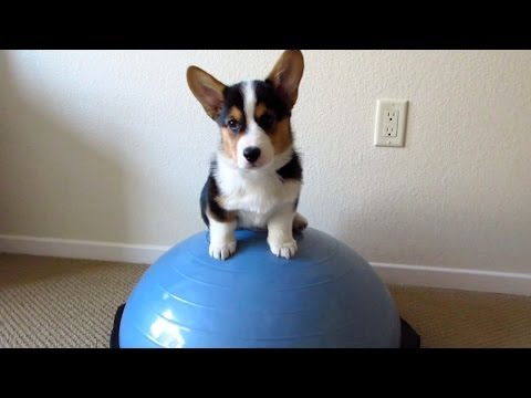 HEALTHY FITNESS PUPPY - Life After College: Ep. 328