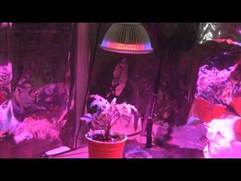 Testing The Kingbo 24 Watt LED Grow Light - It's Good!