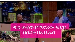 Seifu on EBS - Interview with Azize who lives in forest