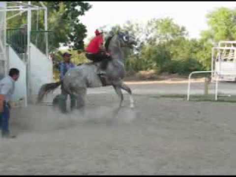 Entrenamiento Profesional de Caballos de Carrera