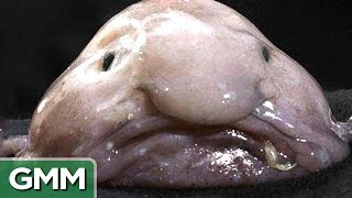 Top 5 Ugliest Animals - RANKED