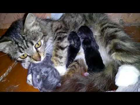 Мурка и новорождённые котята