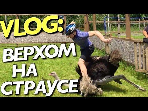 VLOG: ВЕРХОМ НА СТРАУСЕ / Андрей Мартыненко