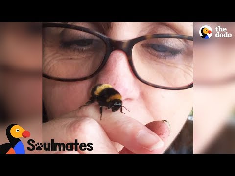 Bee and Woman Become Best Friends After Garden Rescue | The Dodo Soulmates