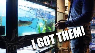 NEW FISH! I got them all!!