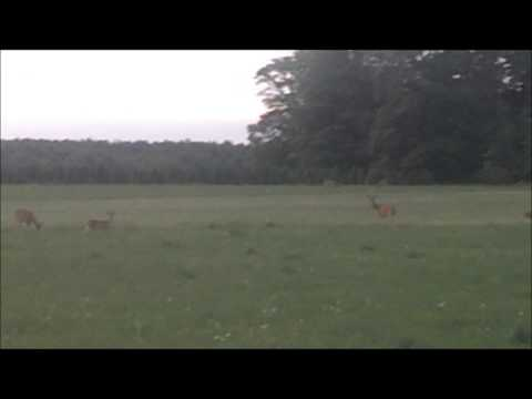 Michigan: Whitetail Deer Herd by Outdoorsman2009