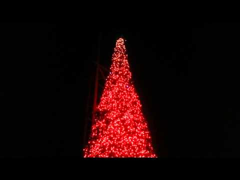 Jungala christmas tree show at busch gardens Tampa