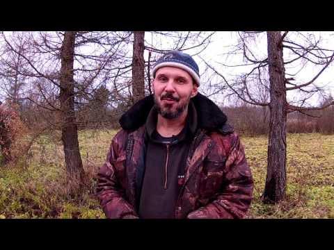 Про бесплатный лес // Из города в деревню