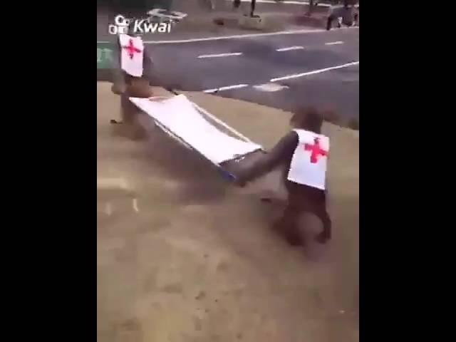 مقطع مضحك القرود