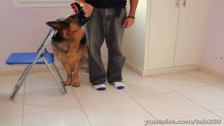 How To Clicker Train Heel Position (Dog Training)
