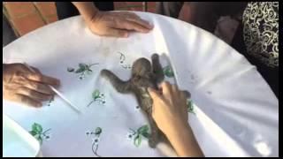 Salvamento de filhote de bicho preguiça