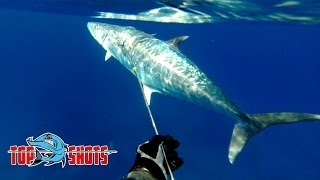 Pole Spear World Record - King Mackerel, Kingfish