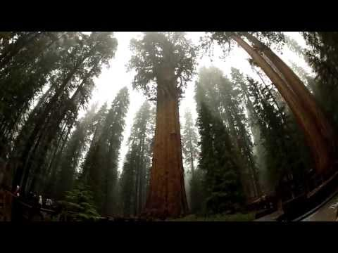 GoPro: Ma Family Trip to Sequoia National Park