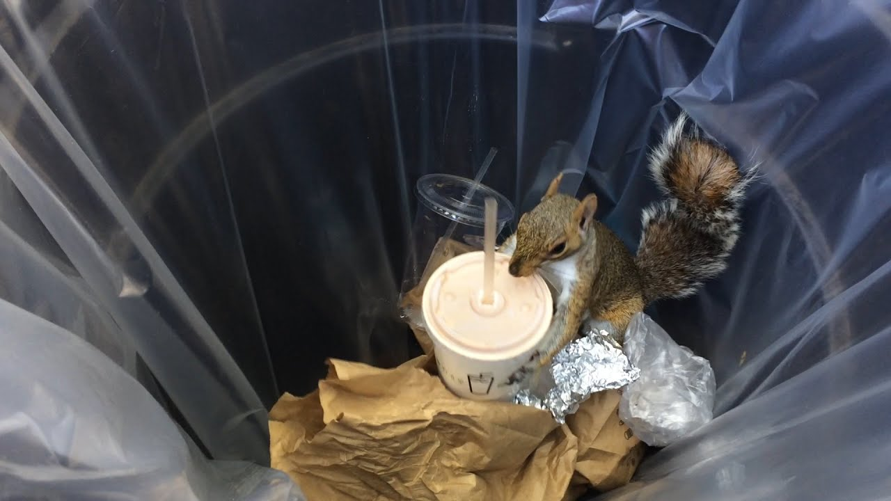 This Milkshake Brings All The Squirrels To The Yard