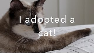 I adopted a cat! | ProfessionalBabe