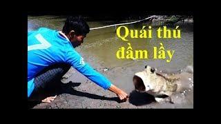 Raising mackerel fish like chicken breed - strange story in Vietnam