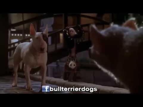 Babe el cerdito en la ciudad - Bull Terrier Pirata (Audio Latino)