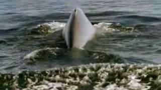 Blue Whale Song (Smooth Relaxing Music)