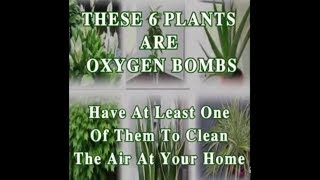 THESE 6 PLANTS ARE OXYGEN BOMBS