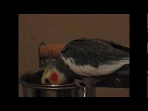 Pet Bird Recipe: Brown Rice and Carrots