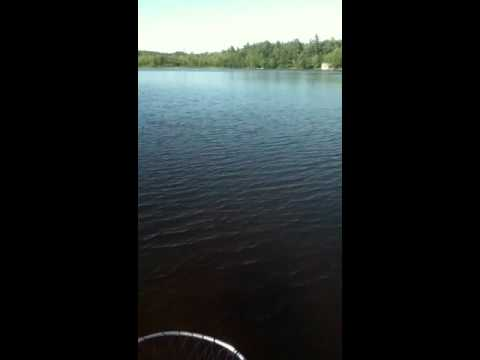 New Hampshire pond fishing . Decent large mouth bass
