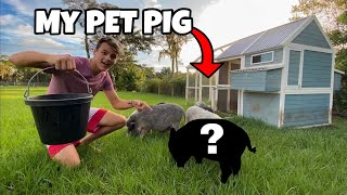 The internet FOUND My Lost Pet Pig....