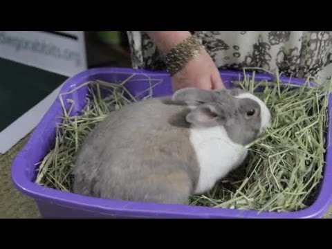 The Types of Plants & Flowers That Are Harmful to Rabbits : Rabbit Care