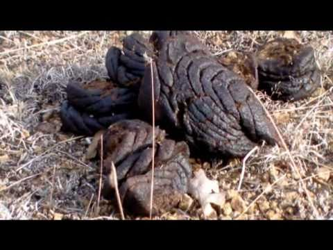 The Scat Survivalists video