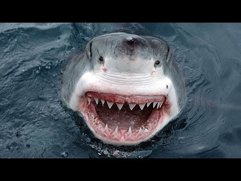 Great White Shark Gets Too Close For Comfort – Caught On Camera
