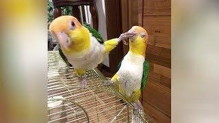 Wanna LAUGH? BIRDS will NOT DISAPPOINT YOU! - Funniest BIRD VIDEOS