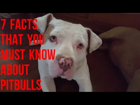 7 Facts You Must Know About The American Pitbull Terrier