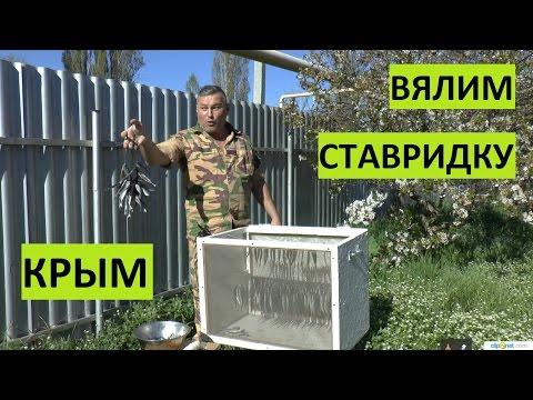 КРЫМ. Вялим Черноморскую ставридку.