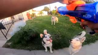 Three Dogs Review: Nerf Dog Ball Launcher, Does It Meet Their Expectations?