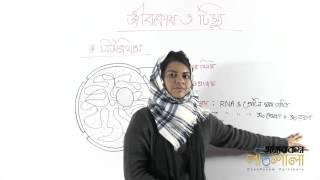 06. Nucleus | নিউক্লিয়াস | OnnoRokom Pathshala