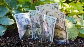 How To Grow And Make Money Easily With Little Work!