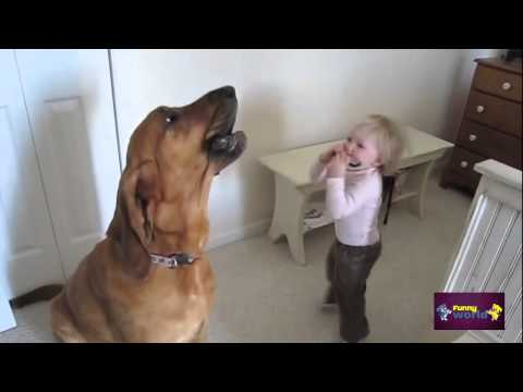 Funny video Funny Animals Toddler and Dog Sing the Blues