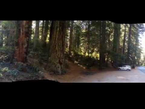 Redwood  National Park Tour  Redwood Adventure  from San Francisco