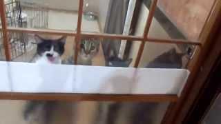 夕飯時の子猫たち