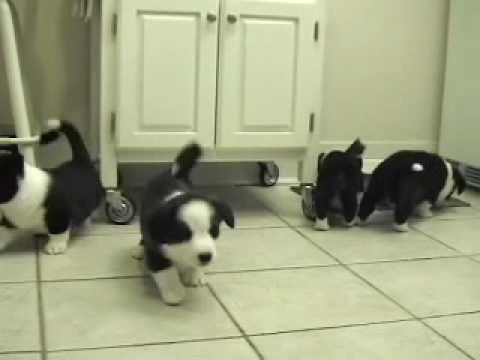 Herding the cat at 6 weeks old