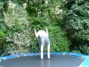 Rhyno Backflip